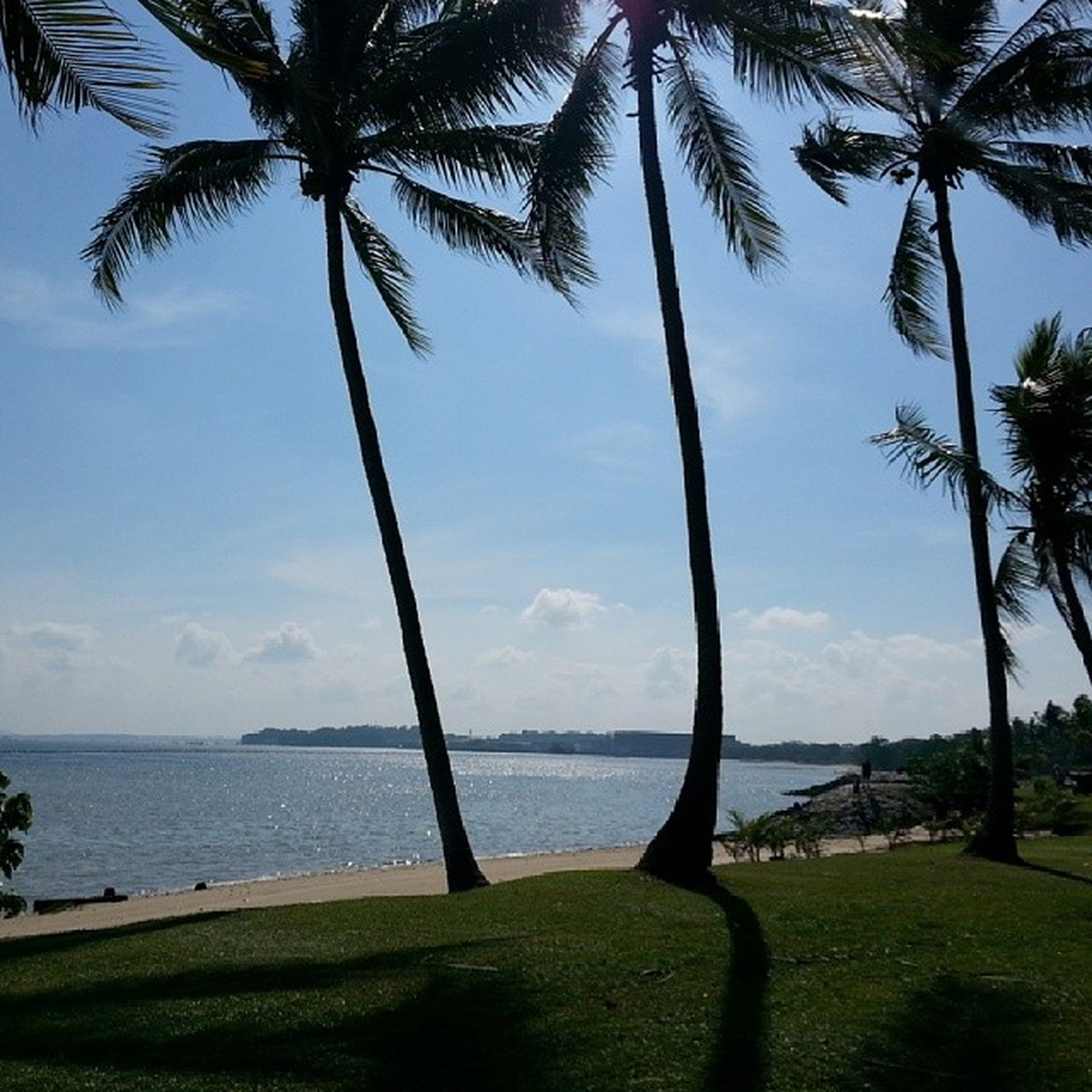 palm tree, tree, sea, water, sky, tranquility, tranquil scene, horizon over water, tree trunk, beach, scenics, beauty in nature, nature, growth, grass, shore, green color, incidental people, vacations, idyllic