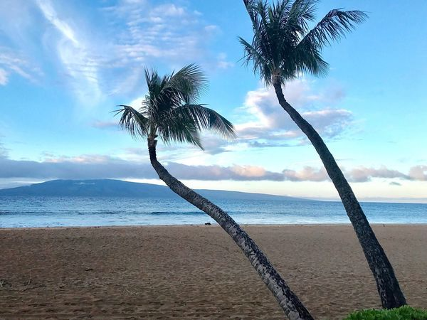 Trees And Sky Palm Trees Hawaii Maui Beach Ocean View Ocean EyeEm Nature Lover Sea Palm Tree Beach Scenics Tranquility Beauty In Nature Sky Nature Tranquil Scene Water Cloud - Sky Horizon Over Water No People Day Sand Outdoors