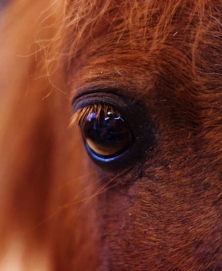 Horse One Animal Animal Eye Domestic Animals Animal Themes Close-up Brown Looking At Camera Mammal Portrait Sensory Perception Full Frame Eyesight Eyeball Human Eye Outdoors Day Eyelash Iris - Eye People