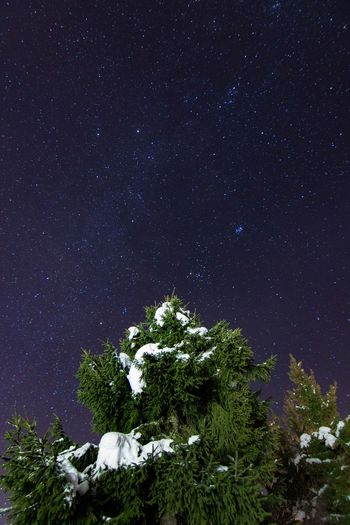 Look at the stars Snow EyeEm Selects EyeEmNewHere Art Creative Light and Shadow Creative Photography Night Star - Space Astronomy Tree Milky Way Galaxy No People Star Field Low Angle View Constellation Sky Nature Space Outdoors Beauty In Nature Astrology Sign Globular Star Cluster