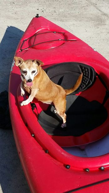 Can we go again?? Kyaking Dog Kyaking Red Pets Dog Mammal No People Outdoors Day
