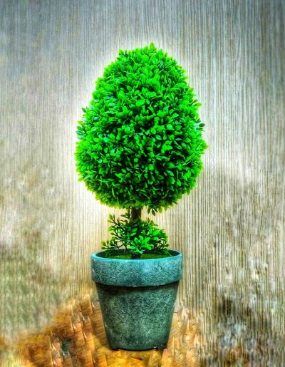 Plastic Tree Plastic Tree Green Color Life Tree HDR Hdr_Collection Green Color Plant Growth Topiary No People Grass Nature Tree Close-up Indoors  Day