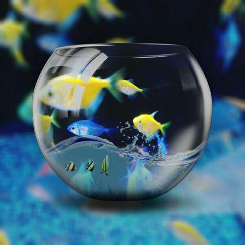 Things That Make Me Happy Neon Fish  Fish Bowl Life In A Fish Bowl Bright Colors Pets Corner Fish Tank No Edit No Fun Nature Edits Animal Photography
