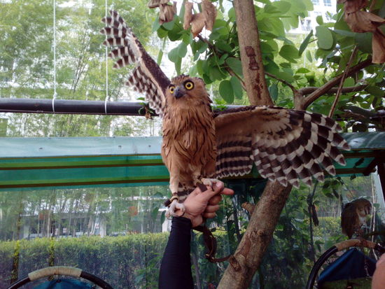 Animal Themes One Animal Tree Animals In The Wild Bird Animal Wildlife No People Nature Mammal Bird Of Prey Day Outdoors Perching Owl Human Hand Human Body Part Green Color Growth Bird Feeder Sparrow Real People Beauty In Nature Close-up