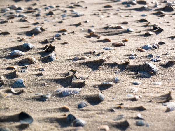 Sand Land Beach Full Frame Backgrounds Nature Sunlight Pattern No People Day Selective Focus High Angle View Textured  Outdoors Tranquility Close-up Sunny Print Landscape Shadow Arid Climate