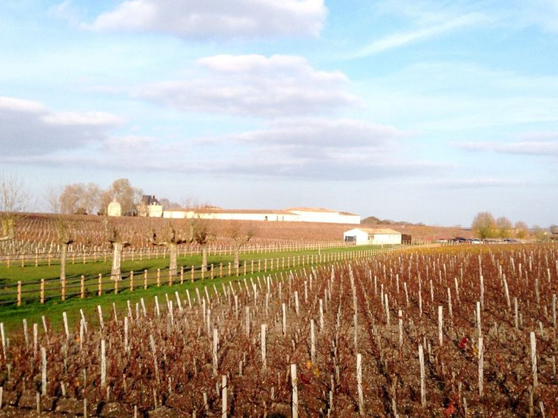 Vineyard Château Beauty In Nature Scenics First Eyeem Photo Wineandmore Bordeaux Freedom Sunshine ☀ Cab Merlot Anyone? Tannin Reds Gravesprofondes