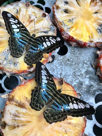 Butterflies feeding on pineapple Butterfly Beautiful Close-up No People Backgrounds Animal Full Frame Animal Themes Nature Animal Wildlife Animals In The Wild