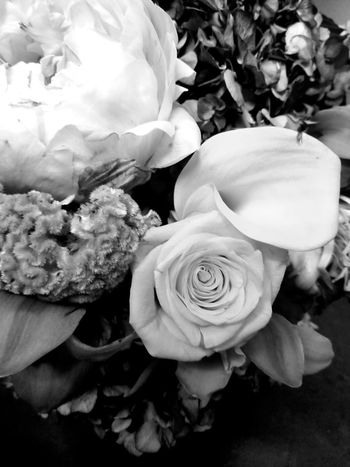 Black And White Friday Flower Rose - Flower Flower Head Petal Nature No People Fragility Close-up Plant Growth Bouquet Indoors  Beauty In Nature Day Freshness Reflection Beauty Tranquility Plant Ynot Justbecause Cellphonephotography S8plusphotography Nature