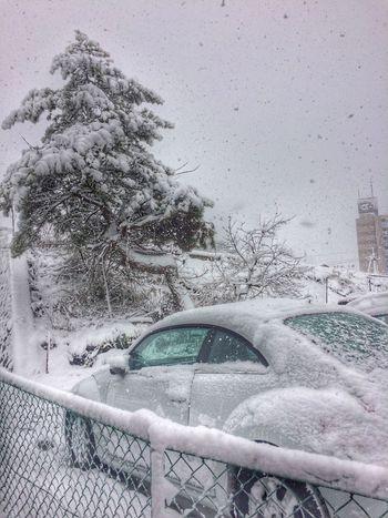 今日は住んでる辺りでこの冬一番の積雪になりました。まだ雪は降り続く模様 Nature Landscape