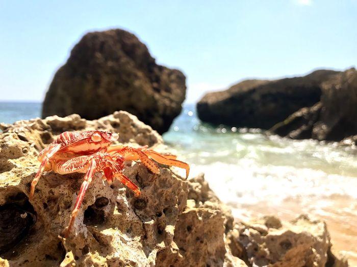 Littel Crab 🦀