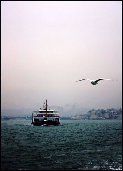 Bird Flying Animal Themes Sea Nautical Vessel Water One Animal Auto Post Production Filter Transportation Spread Wings Animals In The Wild Waterfront Seagull Mode Of Transport Clear Sky Tranquility Tranquil Scene Scenics Nature Outdoors Istanbul Istanbul Turkey Istanbuldayasam Vapur Ve İstanbul Vapur