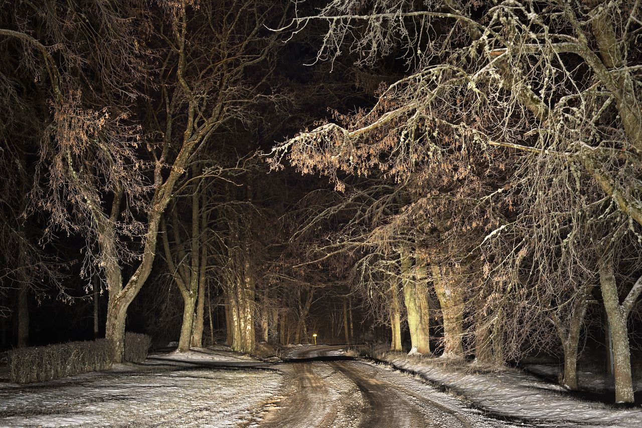 PANORAMIC VIEW OF TREES AT NIGHT