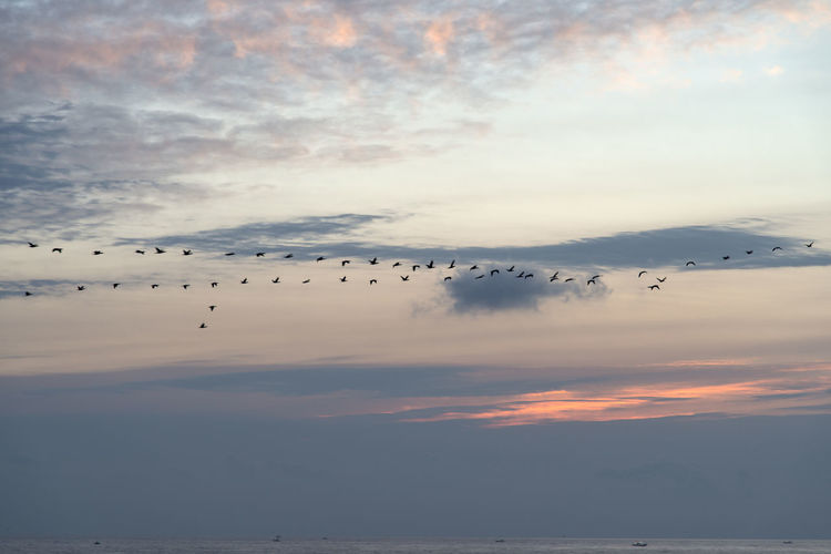 Silhouette Birds Migrating Over Sea Against Sky During Sunrise