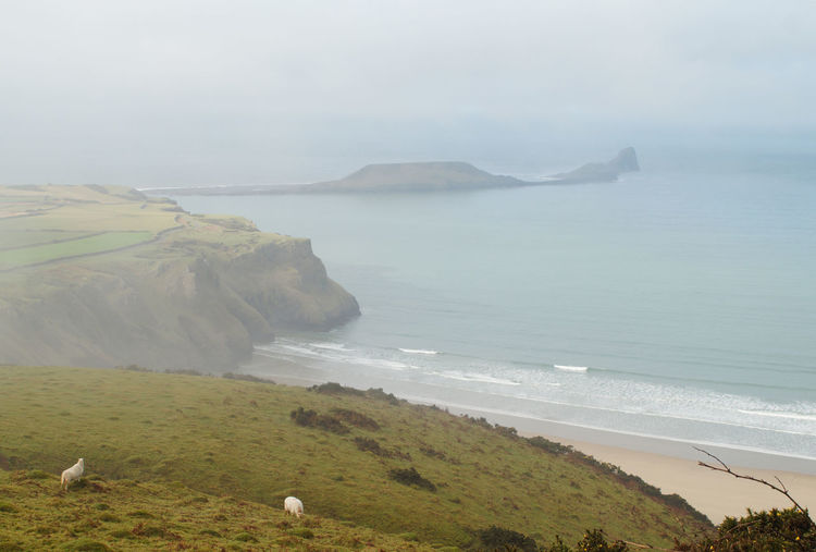 View of Rhossili Bay and Worm's Head Cliffs Hills Rhossili Bay Rugged Wales Wave Weather Winter Worm's Head Beach Blue Day Gower Grass Island Landscape Mist Nature Outdoors Sand Scenics Sea Sheep Water Waves EyeEmNewHere EyeEmNewHere Shades Of Winter
