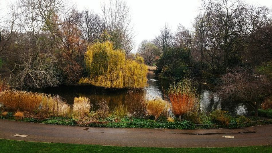 43 Golden Moments London Vibes Fall Beauty Fall Feel The Journey St James Park London  St James Park  Autumn Autumn Colors
