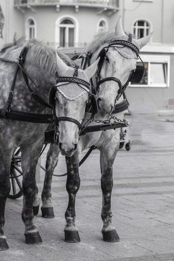 Animal Themes Bridle Close-up Day Domestic Animals EyeEm Best Shots Horse Mammal No People Outdoors Photography Street Working Animal