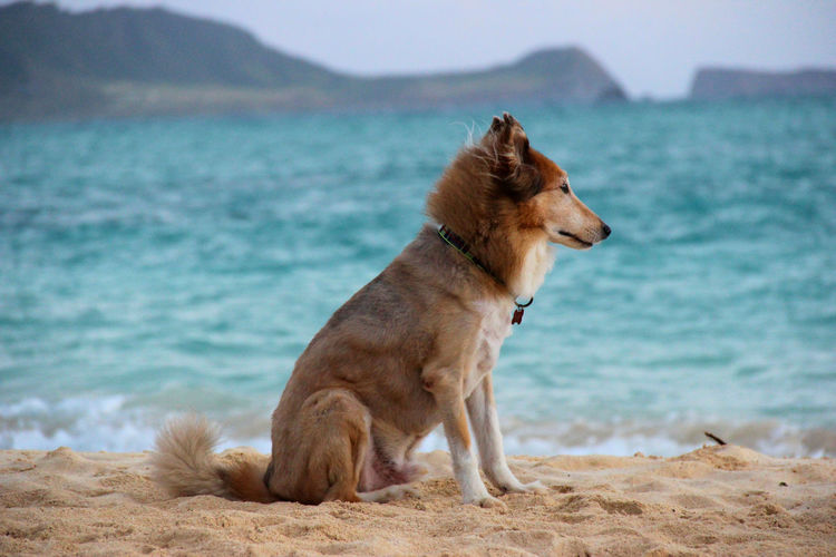 Dog sitting on sand at beach