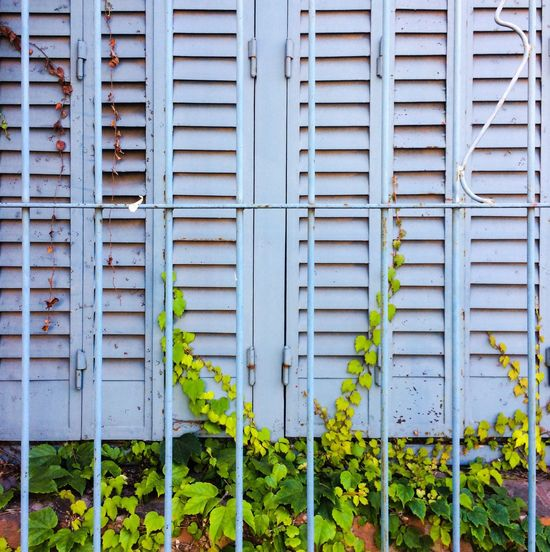 Safety Security Protection No People Day Plant Growth Outdoors Full Frame Green Color Built Structure Architecture Ivy Close-up Corrugated Iron Nature Getting Inspired Getting Creative Wall - Building Feature Architectural Detail Plant Green Color Springtime Color Palette Window Collection