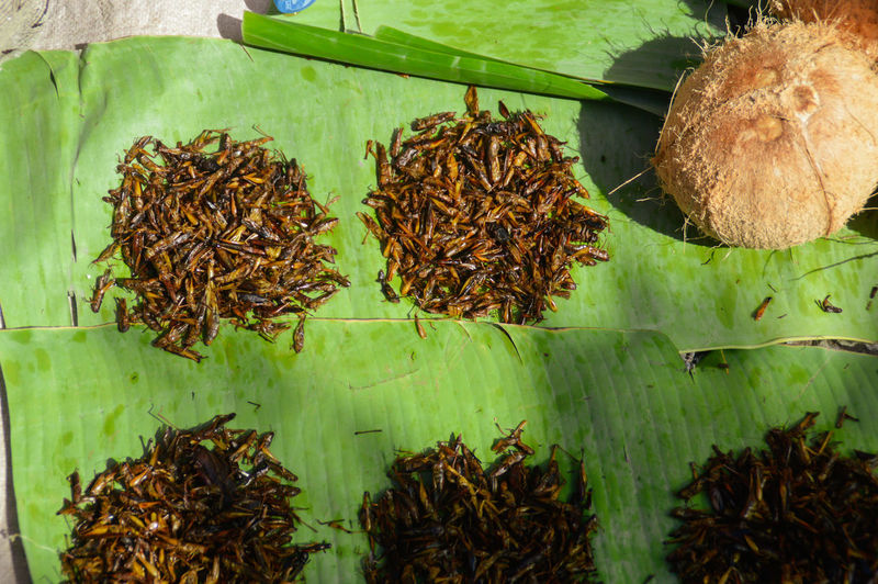 Fried grasshoppers sold in the exotic Luang Prabang morning market... Local Delicacies Travel Exotic Food Laos Food Laos Exotic Food Fried Grasshoper Fried Insects Luang Prabang Morning Market Exoticism Exotic Market No People Top View Top Perspective Travel Photography Travel Experience Food And Culture ASIA Laos Leaf Close-up Plant Green Color Banana Leaf