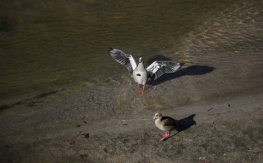 Animal Themes Animal Vertebrate Bird Water Animal Wildlife Animals In The Wild High Angle View One Animal Lake Nature No People Spread Wings Day Flying Beach Land Seagull