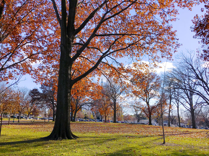 lower senate park in the fall Autumn Beauty In Nature Capitol Hill Change Day Fall Government Grass Green Color Growth Leaf Lower Senate Park Nature No People Old Outdoors Scenics Senate Sky Tranquil Scene Tranquility Tree Washington, D. C. The City Light EyeEm Team