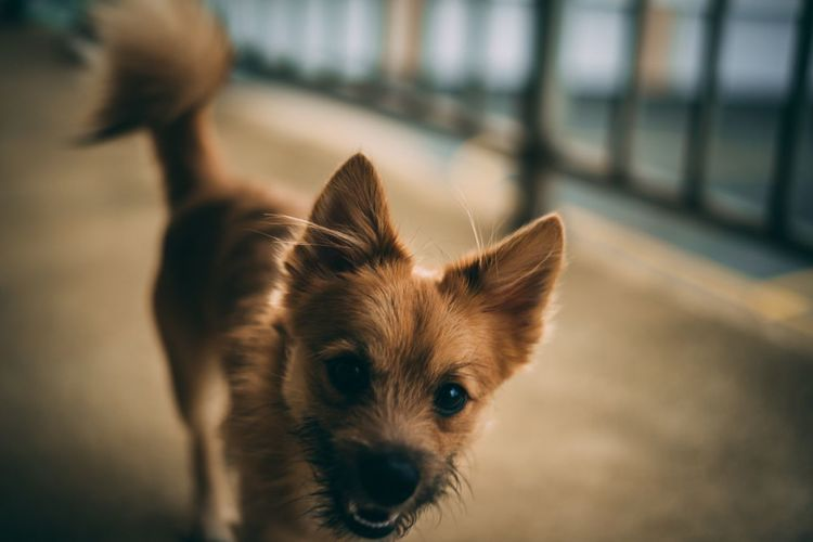 Close-up portrait of dog standing outdoors