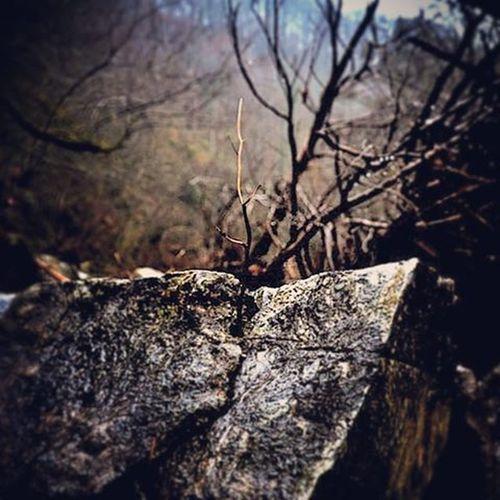 Bir Umuttur Yasamak Büyüdüğün Yer Kaya Bile Olsa Kırklareli Bulgaria Doğa
