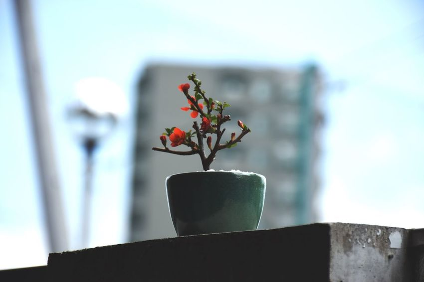 Plant Flower Flowering Plant Nature Potted Plant No People Focus On Foreground