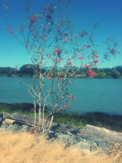 Riverside River Collection, Tranquility Tree