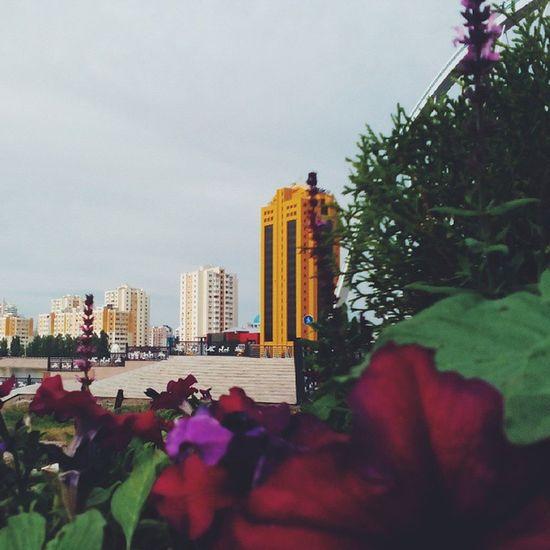 Добрый день! _________________________________ Kazakhstan Astana Казахстан Астана Vscocam VSCO Vscoastana Astanainsta Instakz Instagram World AdelyaSAN Nature Vsconature Astana_kz Astanakz Astanaphoto Vscogram Vscoaward Vscogood Vscocamphotos Astanagrammm Astana_insta Astanacity Astana_city astanagram