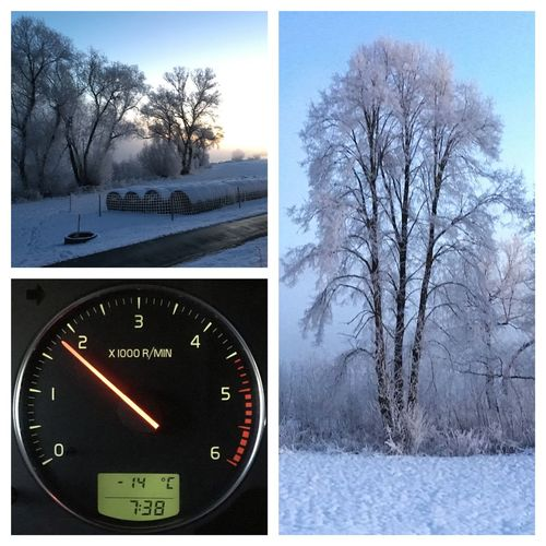 Winter Cold Winter ❄⛄ Frost