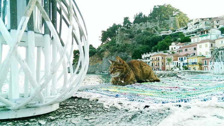 Taking Photos Greece Streetphotography Htcphotography Walking Around Animals Cat Animal