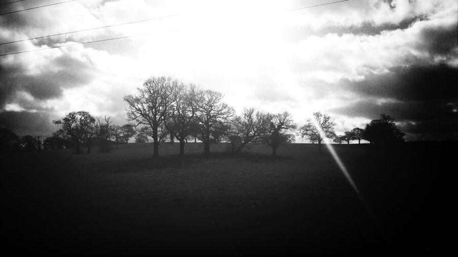Trees Nature Taking Photos England