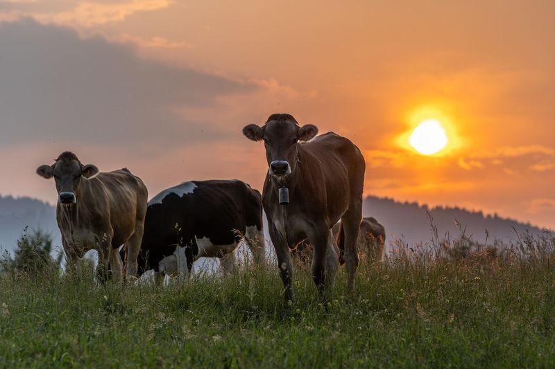 Sunset Mammal