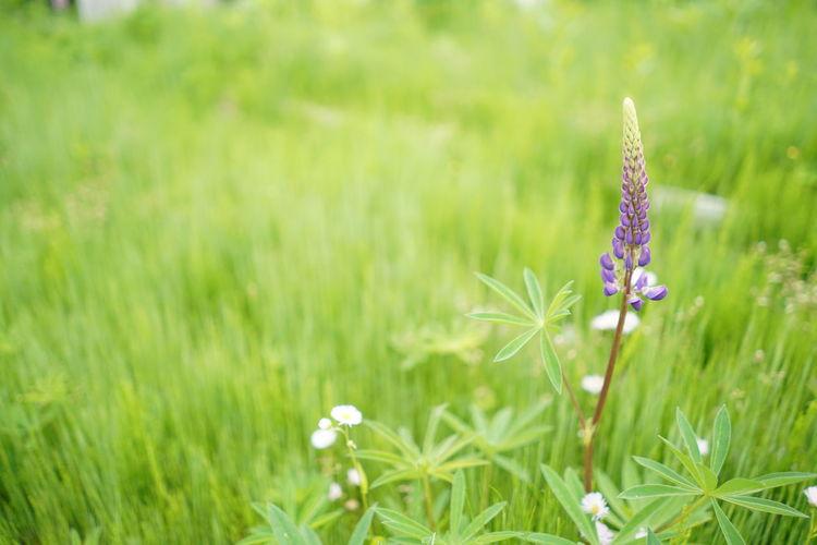 plant Plant