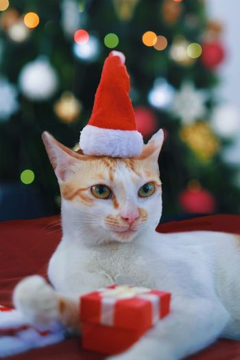 Close-up of cat wearing santa hat while sitting against christmas tree