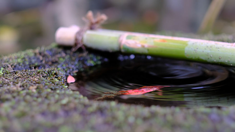 Cropped bamboo dipper in japanese garden