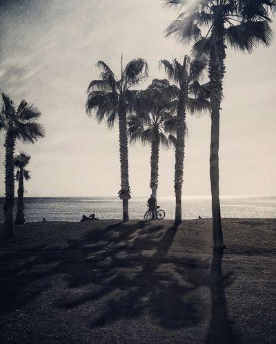 Malaga Andalucía SPAIN España🇪🇸 Huaweig8 Huawei Photoart Photography Tourism Fotografia Foto Amateurphotographer  Photo Of The Day Photo Streetphotography Mobilephoto Mobilephotography Malagueta Malagacity Malagueta Beach Fresh On Eyeem