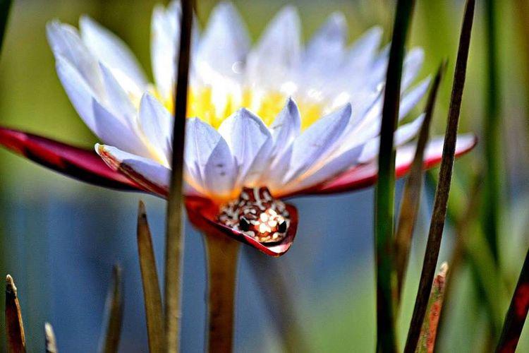 Frogs Of Botswana Hidden In Plain Sight Camoflauge Botswana Beauty Small Creatures