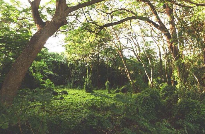So green ?? Christmasisland Jungle Forrest Nature