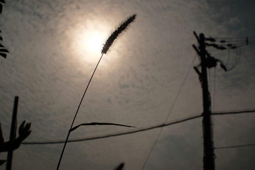 Spot lights Fuji X-T1 Pancolar 50mm F2 FUJIFILM X-T1 Carl Zeiss Jena Plants 🌱 Sun EyeEm Nature Lover Nature_collection Plant Sunset