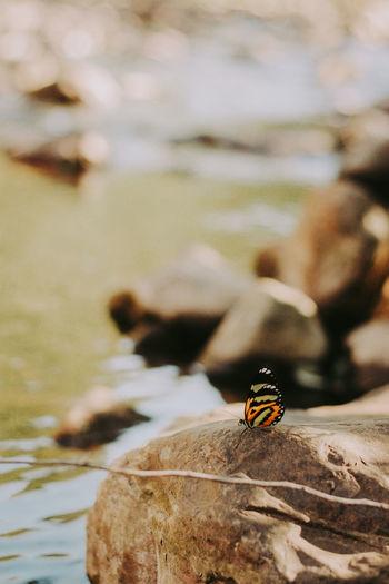 Close-up of ladybug on rock