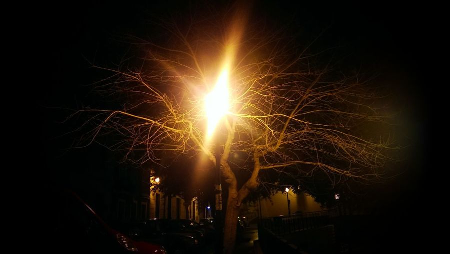 luces en los árboles...