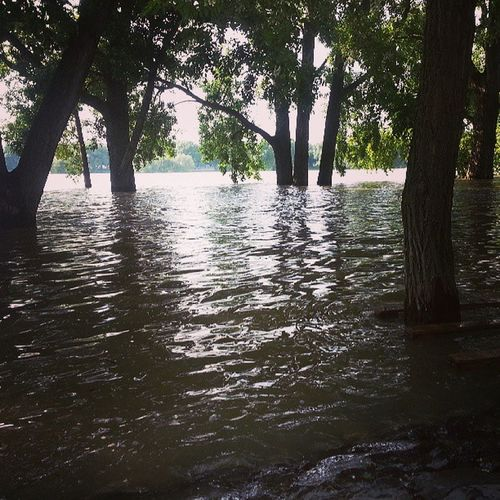 Drowning trees #koeln #cologne #hochwasser #hightide #rhein #rhine Cologne Hochwasser Rhein Rhine Koeln Hightide