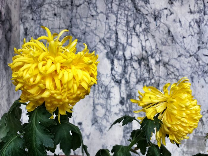 Yellow Flowers Church Street San Francisco Marble Paint The Town Yellow
