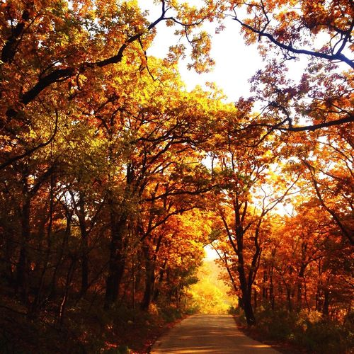 Верни мне осень ...🍂🍂