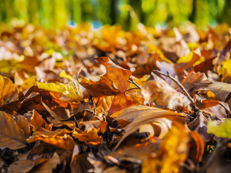 Autumn Leaves Autumn Leaves Leaf Plant Part Change Nature Falling No People Day Orange Color Beauty In Nature Outdoors Natural Condition Autumn Collection Fall Lakeside