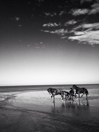 Side view of a horse carriage on beach
