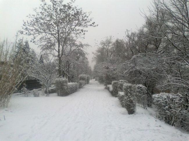 Molnar Island in Budapest Beauty In Nature Cold Cold Temperature Deep Snow Nature Non-urban Scene Snow Weather Winter