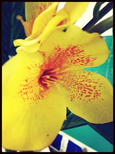 Falseness of flowers